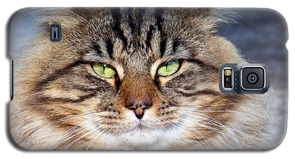 Maine Coon I Galaxy S5 Case