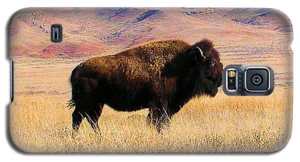 Majestic Buffalo In Kansas Galaxy S5 Case