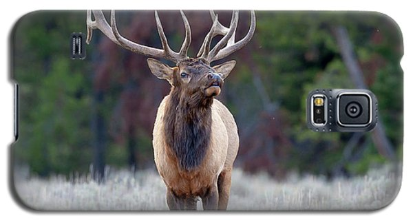 Majestic Bull Elk Galaxy S5 Case by Jack Bell
