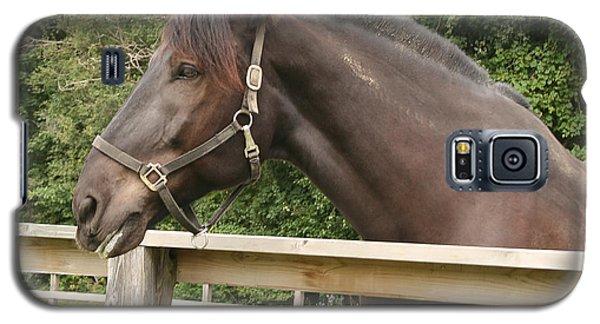 Majestic Horse  Galaxy S5 Case