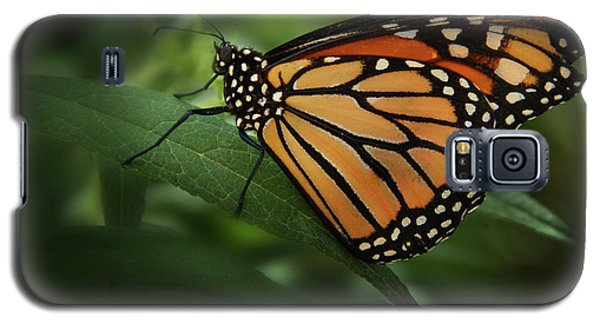 Majestic Monarch Galaxy S5 Case by Marie Leslie