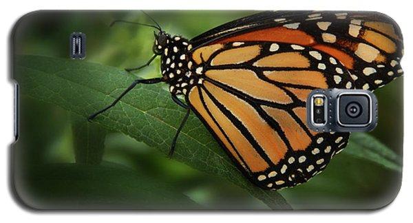 Majestic Monarch Galaxy S5 Case