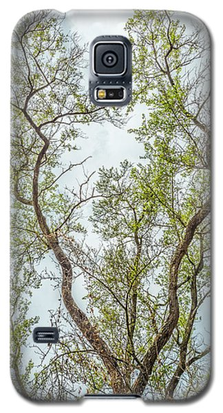 Majestic Mountain Mahogany Galaxy S5 Case by Alexander Kunz