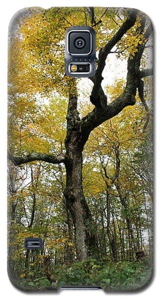 Majestic Tree Galaxy S5 Case
