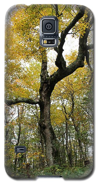 Majestic Tree Galaxy S5 Case