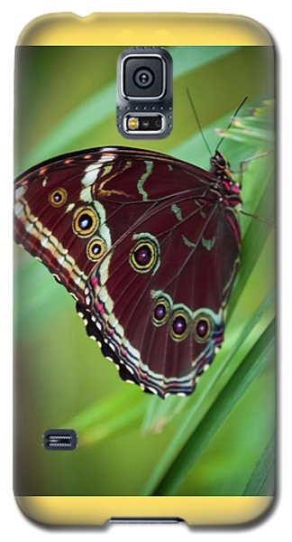 Majesty Of Nature Galaxy S5 Case by Karen Wiles