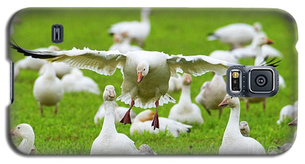Galaxy S5 Case featuring the photograph Make Room by Mike Dawson