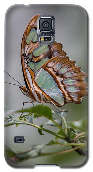 Malachite Butterfly Profile Galaxy S5 Case