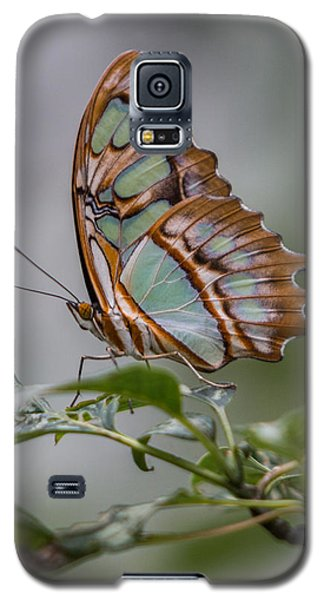 Malachite Butterfly Profile Galaxy S5 Case