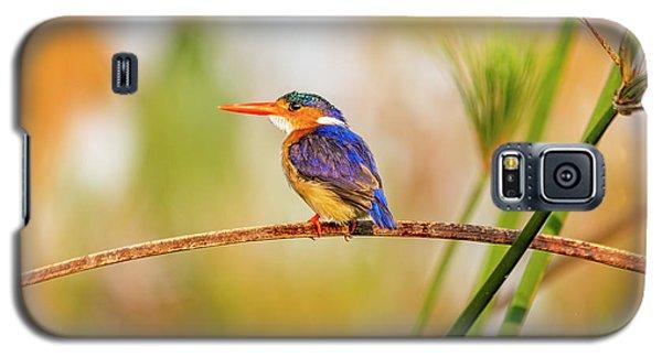 Malachite Kingfisher Hunting Galaxy S5 Case