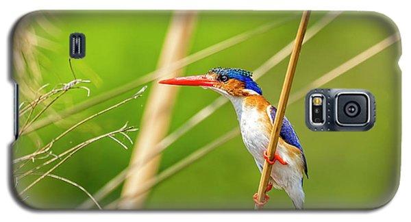 Malachite Kingfisher Galaxy S5 Case