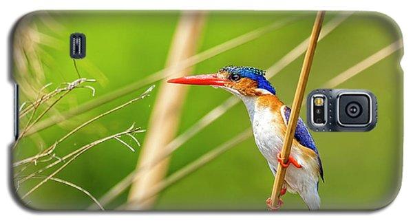 Malalchite Kingfisher Galaxy S5 Case