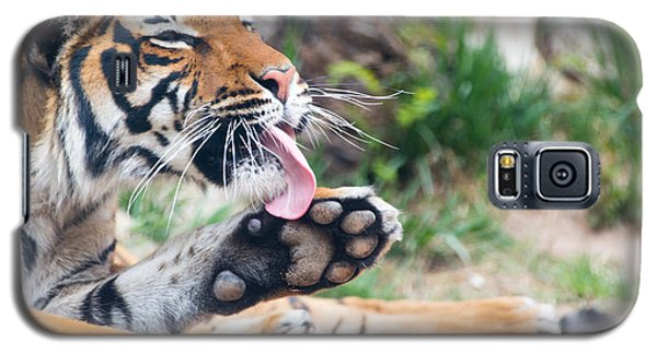 Malayan Tiger Grooming Galaxy S5 Case