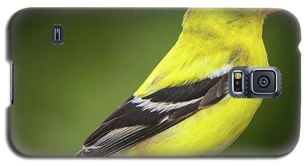 Male American Golden Finch On Twig Galaxy S5 Case