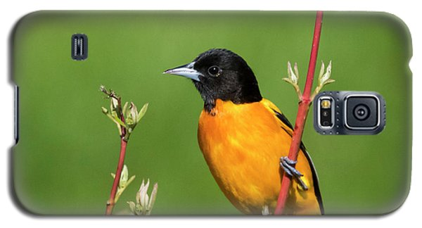 Male Baltimore Oriole Posing Galaxy S5 Case
