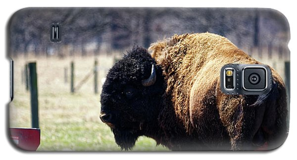 Male Bison Galaxy S5 Case