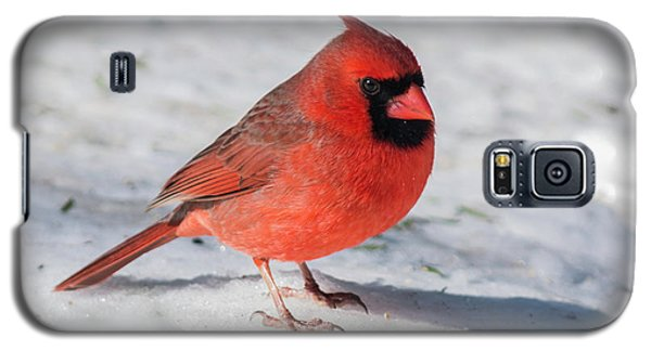 Male Cardinal In Winter Galaxy S5 Case