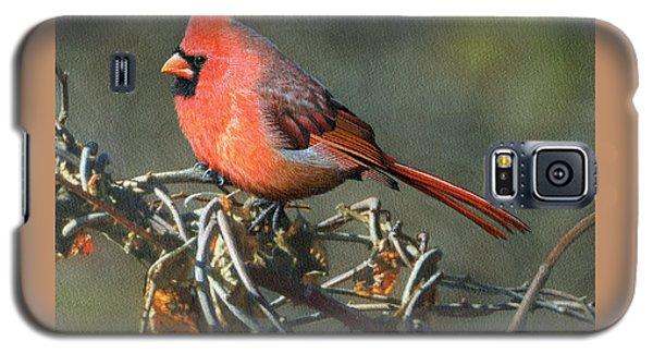 Male Cardinal Galaxy S5 Case by Ken Everett