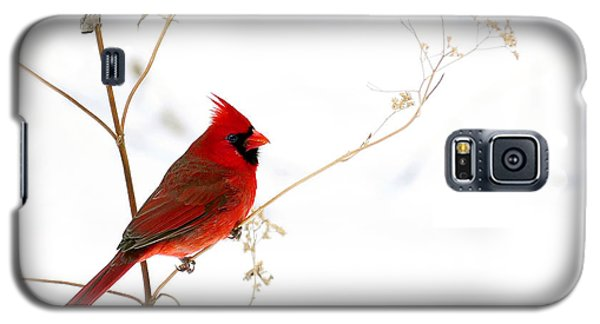 Male Cardinal Posing In The Snow Galaxy S5 Case