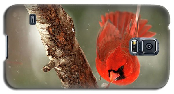 Galaxy S5 Case featuring the photograph Male Cardinal Take Off by Darren Fisher