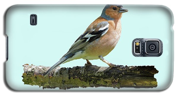 Male Chaffinch, Blue Background Galaxy S5 Case by Paul Gulliver