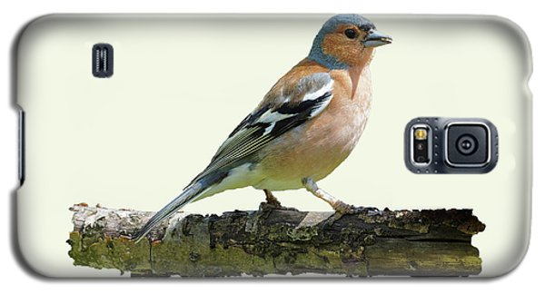 Galaxy S5 Case featuring the photograph Male Chaffinch, Cream Background by Paul Gulliver