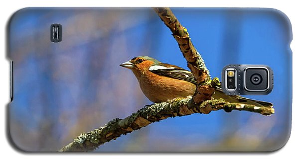 Male Common Chaffinch Bird, Fringilla Coelebs Galaxy S5 Case