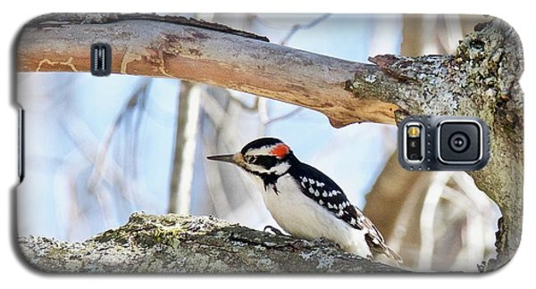 Galaxy S5 Case featuring the photograph Male Downey Woodpecker 1112 by Michael Peychich