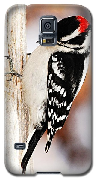 Male Downy Woodpecker 3 Galaxy S5 Case