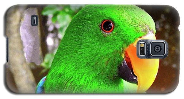 Male Eclectus Parrot II Galaxy S5 Case