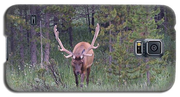 Bull Elk Rmnp Co Galaxy S5 Case