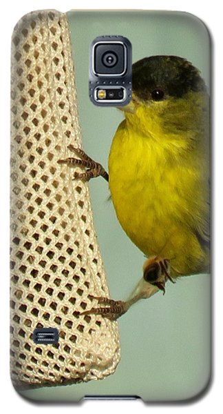 Male Goldfinch On Sock Feeder Galaxy S5 Case