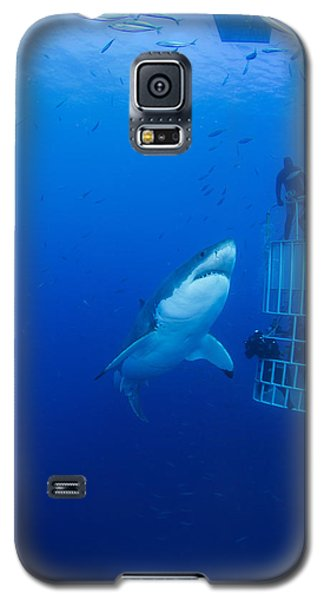 Male Great White With Cage, Guadalupe Galaxy S5 Case by Todd Winner