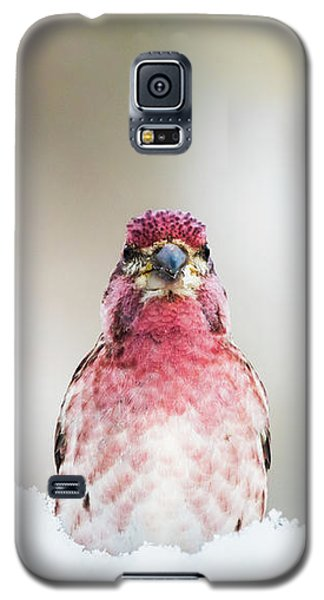 Male House Finch Galaxy S5 Case