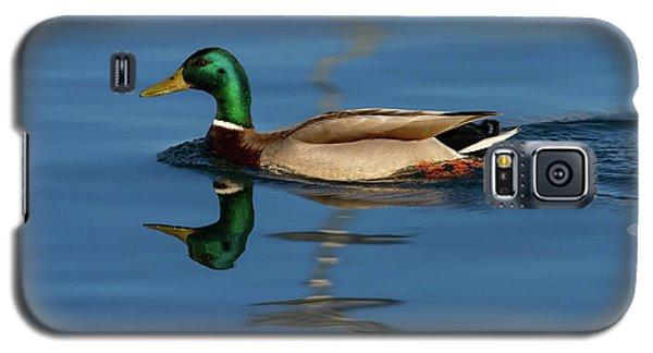 Male Mallard Or Wild Duck, Anas Platyrhynchos, Portrait Galaxy S5 Case