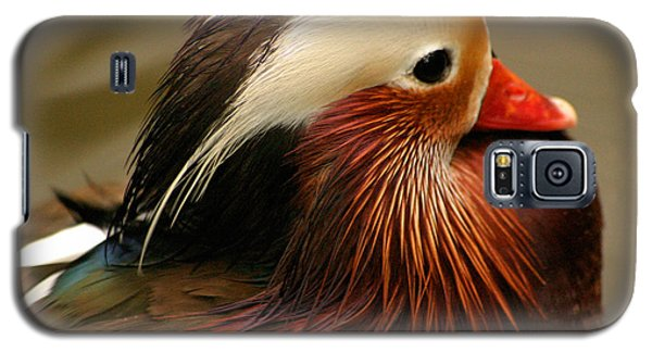 Male Mandarin Duck China Galaxy S5 Case by Ralph A  Ledergerber-Photography