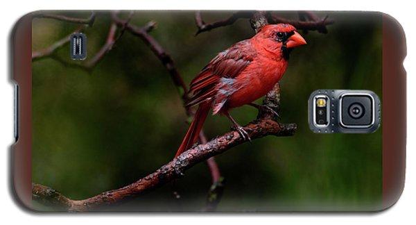 Male Northern Cardinal Galaxy S5 Case