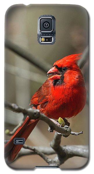 Male Northern Cardinal In Spring Galaxy S5 Case