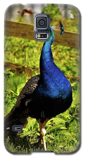Male Peacock Galaxy S5 Case