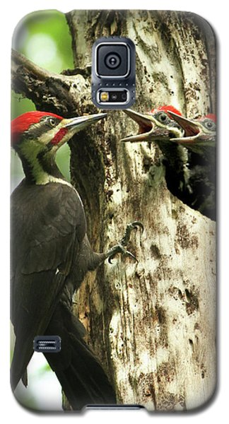 Male Pileated Woodpecker At Nest Galaxy S5 Case by Mircea Costina Photography