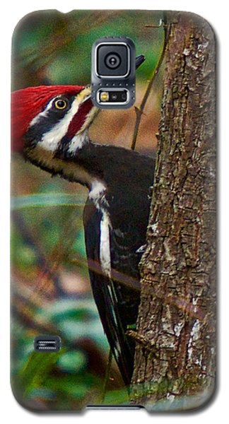 Male Pileated Woodpecker Galaxy S5 Case