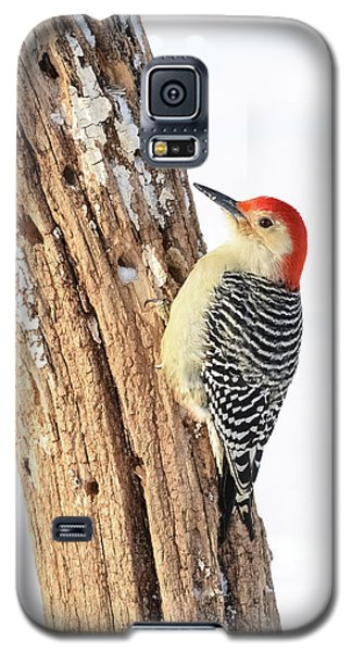 Galaxy S5 Case featuring the photograph Male Red-bellied Woodpecker by Paul Miller
