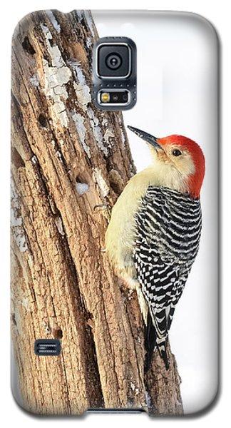 Male Red-bellied Woodpecker Galaxy S5 Case by Paul Miller