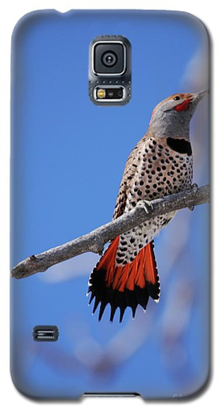 Male Red Shafted Northern Flicker Galaxy S5 Case