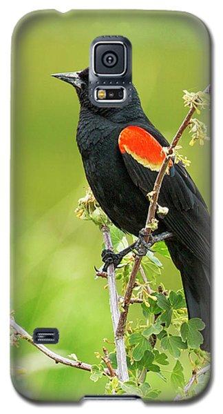 Male Red-winged Blackbird Galaxy S5 Case