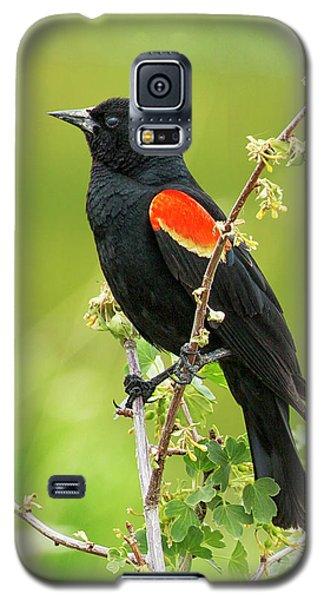 Male Red-winged Blackbird Galaxy S5 Case by Belinda Greb