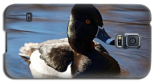 Male Ring-necked Duck Galaxy S5 Case