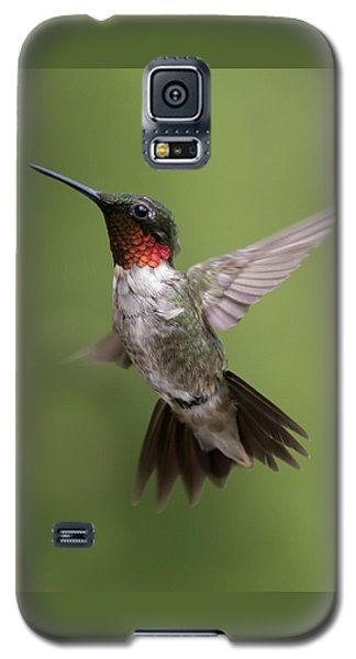 Male Ruby Throated Hummingbird Galaxy S5 Case