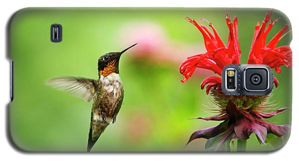 Male Ruby-throated Hummingbird Hovering Near Flowers Galaxy S5 Case