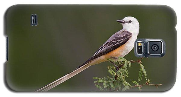 Male Scissor-tail Flycatcher Tyrannus Forficatus Wild Texas Galaxy S5 Case